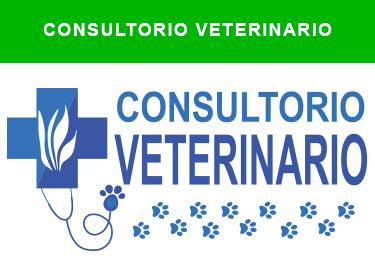 consultorio veterinario comercial guiralsa