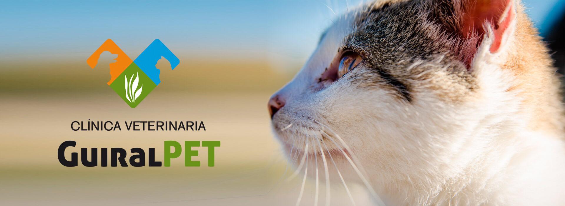 Clínica veterinaria en Huesca