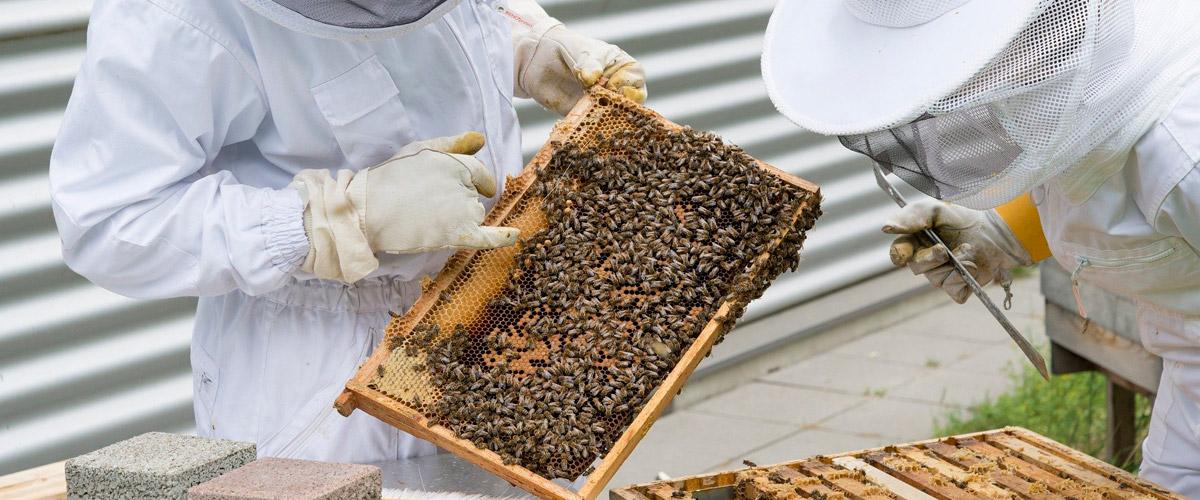 comprar material de apicultura en Huesca