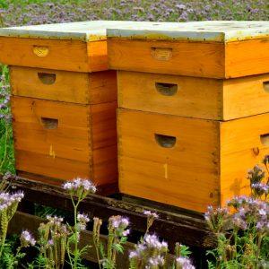 material de apicultura Guiralsa